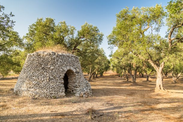 Olive Farm Puglia